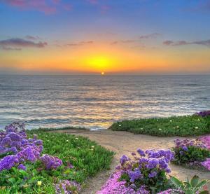 sun beach flowers