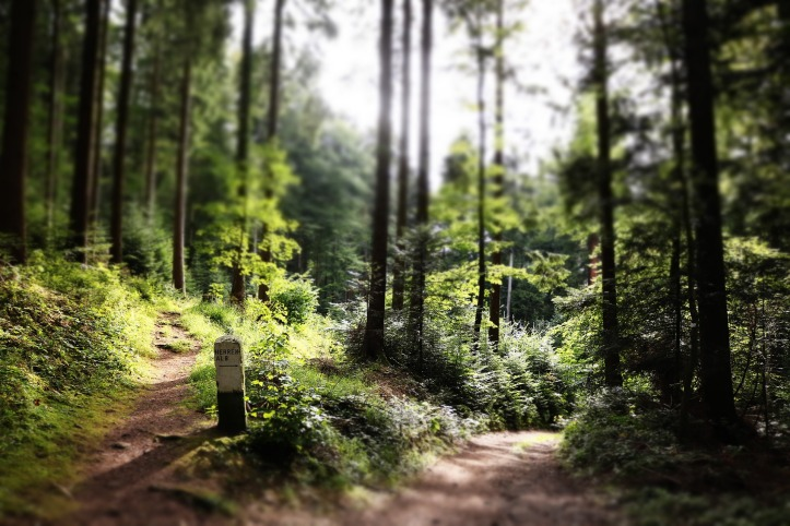 path choice in forest-1851035_1920